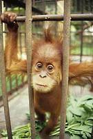 Hermano mono