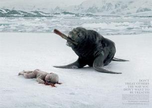 Contra la matanza de focas en Canadá